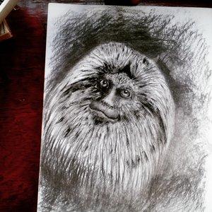Primate - Óleo + carbonilla