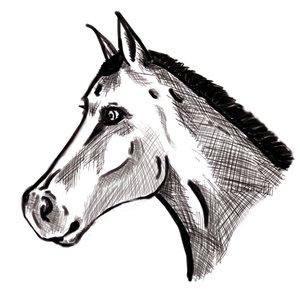 caballo_dibujo_295904.png
