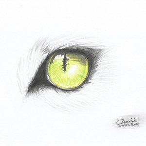 ojo_2_254163.jpg