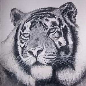 tigre_297584.jpg