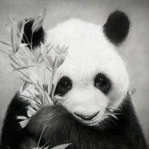 39._Panda_by_Jonatan_Alonzo_Art_297913.jpg