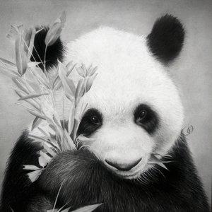 39._Panda_by_Jonatan_Alonzo_Art_297913.jpg
