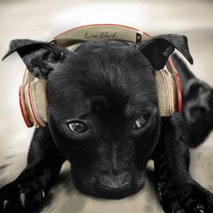 perro_negro_y_audifonos_249392.jpg