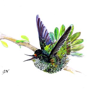 humming_bird_by_chinchillacosmica_d9bul9z_260245.png