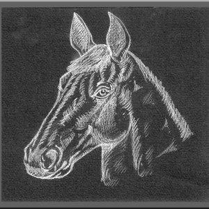 caballo_001_261355.jpg