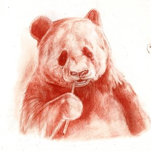 panda_262325.jpg