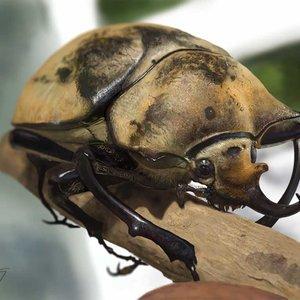 Beetle1_262855.jpg