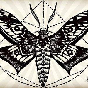 moth_315236.jpg