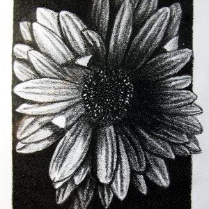 Flor_316668.JPG