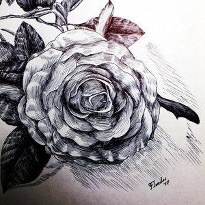 Rosa_boligrafo_316759.JPG