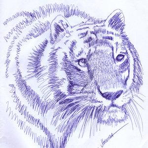 tigre06_318696.jpg