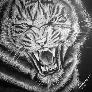 Su majestad el Tigre