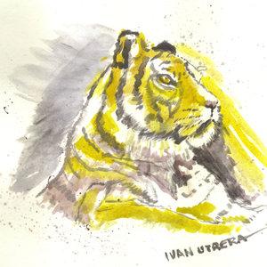 tigre01_320588.jpg
