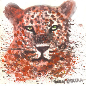tigre0_320758.jpg