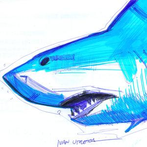 shark01_322667.jpg