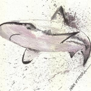 shark_322797.jpg