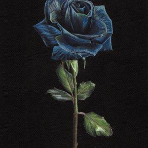 Rosa_Azul_323004.jpg