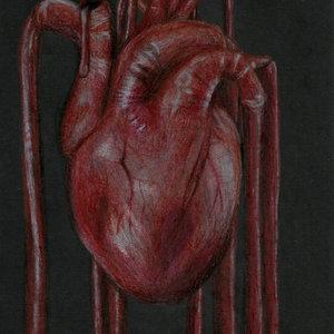 Cardia_323319.jpg
