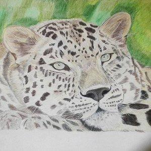 Leopardo_300849.jpg