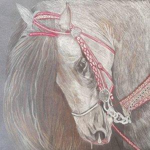 caballo_blanco_300848.jpg