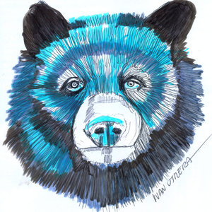 bear_323816.jpg