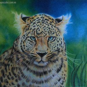 leopardo2_301089.jpg