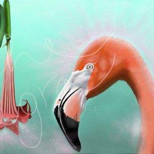 Flamingo floripondio