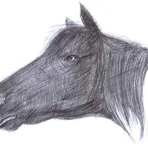 horse_327634.jpg
