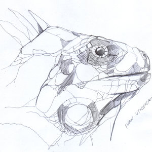 iguana_327588.jpg