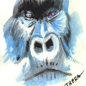 gorilla03_327932.jpg
