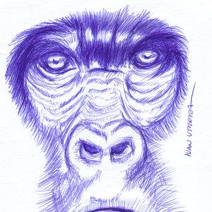 gorilla06_327917.jpg