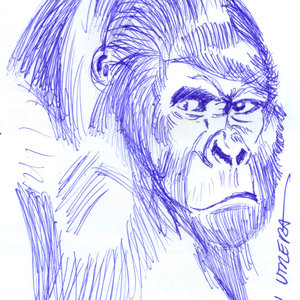 gorilla02_328135.jpg