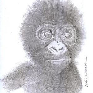 gorilla01_328276.jpg