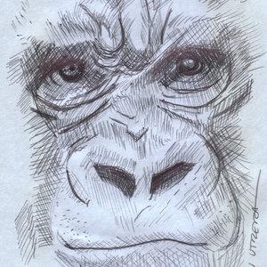 gorilla_328294.jpg
