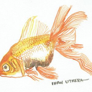 fish01_328397.jpg