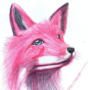 fox_328386.jpg