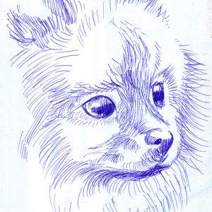 dog02_328677.jpg