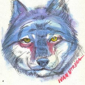 wolf02_329068.jpg