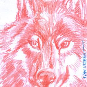 wolf03_329055.jpg
