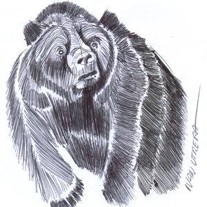 bear04_329146.jpg