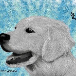 Dog_OZ_329390.jpg