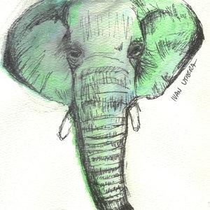 elefante01_329294.jpg