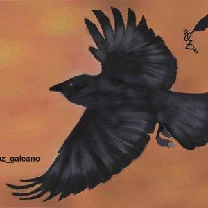 A_Flying_Crow_329603.jpg