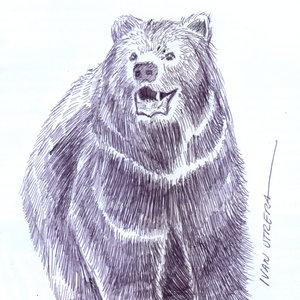 bear09_329734.jpg
