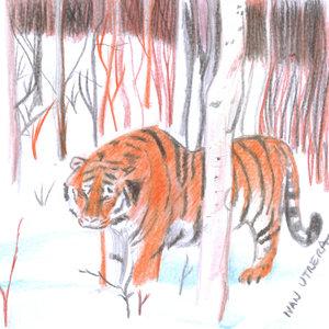 tiger17_329730.jpg