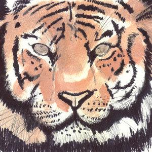 tiger18_329701.jpg