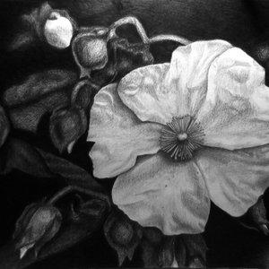 Flor en oscuro