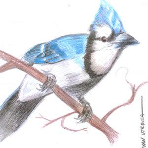 bird09_330263.jpg