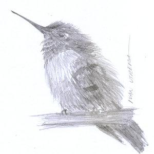 bird10_330267.jpg