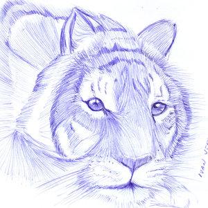 tiger11_330265.jpg